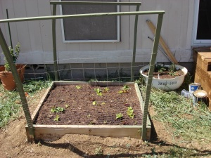 The lettuce bed, and the recycled satellite dish/herb garden